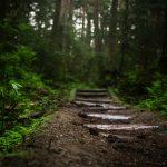 Waldweg auf Steinen